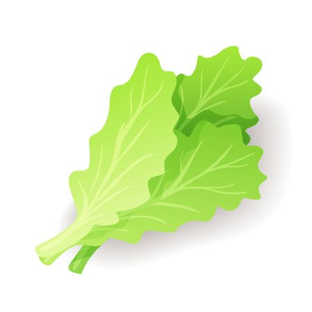 Fresh green salad leaf icon isolated, organic healthy food, vegetable, vector illustration