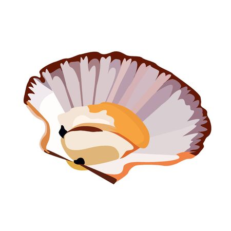 Scallop in shell icon isolated on white background, fresh tasty seafood, healthy food, vector illustration Иллюстрация