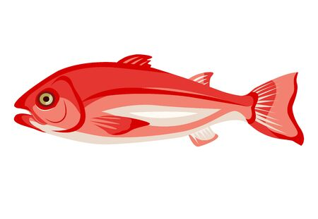 Raw northern red snapper icon isolated on white background, healthy food, fresh whole fish, vector illustration