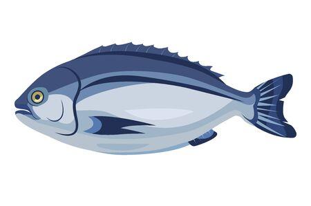Dorado fish icon isolated on white background, healthy fresh product, mediterranean cuisine, vector illustration Ilustrace