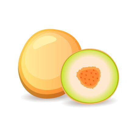 Juicy melon isolated on white background. Delicious tropical fruit, vector illustration in flat style. Balanced vegan diet concept