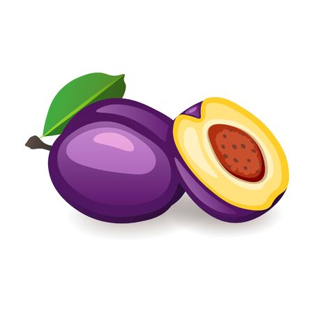 Fresh organic plums isolated on white background. Delicious ripe fruit, vector illustration in flat style. Healthy nutrition concept