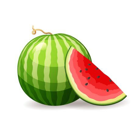 Fresh ripe watermelon on white background, isolated. Tasty summer fruit, vector illustration in flat style. Healthy eating concept