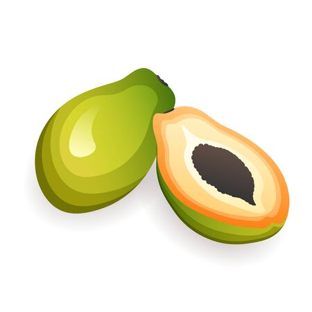 Delicious papayas, isolated on white background. Organic tropical fruits, vector illustration in flat style. Healthy food concept