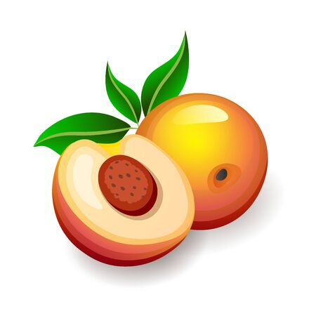 Cut and whole peaches with leaves on white background. Tasty exotic fruits, vector illustration in flat style. Nutrition and health concept