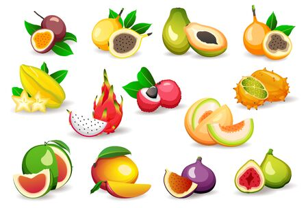 Set of various exotic fruits isolated on white background, flat style vector illustrations. Vegetarian food concept