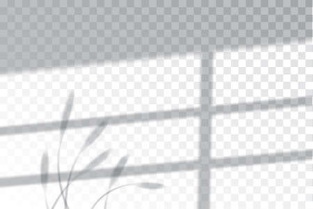 Shadow, overlay effects mock up, window frame and leaf of plants, natural light, vector illustration