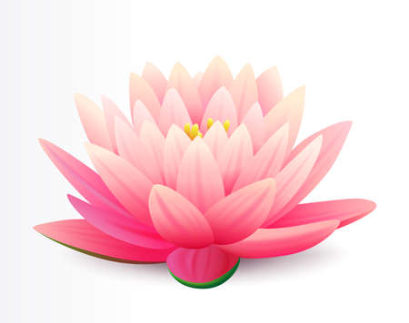 Beautiful realistic pink lotus flower isolated on white background, water plant, vector illustration. Flower for cosmetic products cover. 矢量图像