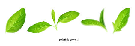 Realistic fresh mint tea green leaves on white background, tea and herb Иллюстрация
