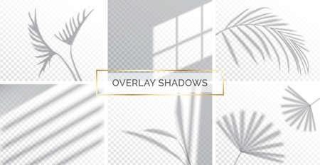 Set of shadows, overlay effects mock up, window frame and leaf of plants, natural light, vector illustration. Illustration