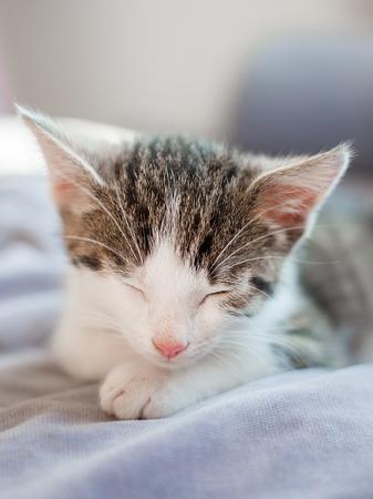 Cute little kitten with pink nose sleeps on the sofa Foto de archivo
