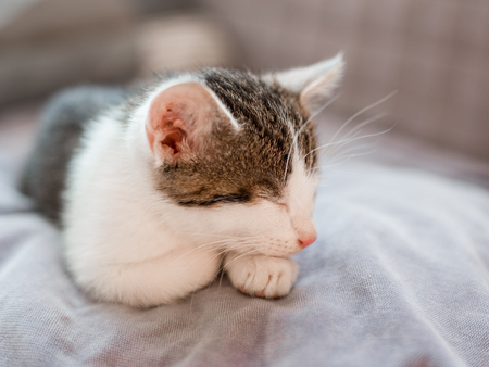 Cute little kitten with pink nose sleeps on the sofa Stock Photo