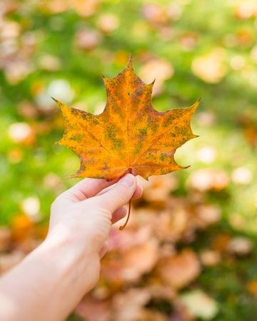 woman hand in nature holding amazing color leave