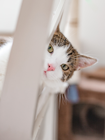 Beautiful cat lying on a white chair at home, indoors, funny face expression. Striped not purebred kitten looks into the camera Фото со стока - 124148371