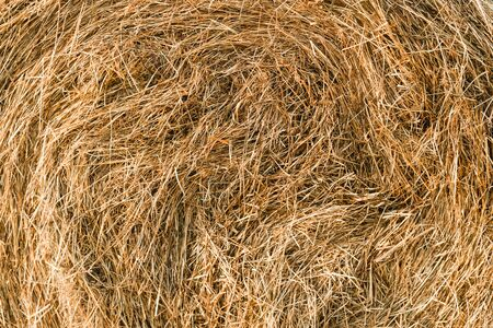 A close-up shot of a twisted haystack, dry straw. Hay texture. Harvesting concept in agriculture