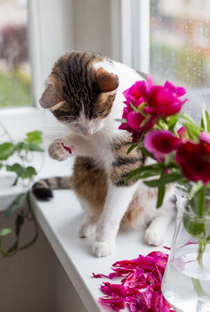 Cat sits on a windowsill near bouquet of pink peonies, funny animal