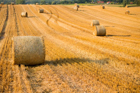 Haystacks in autumn field. Wheat yellow golden harvest in summer. Countryside natural landscape. Hay bale