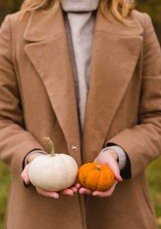 Woman holds two orange and white pumpkins. Harvest concept. Copy space. Autumn lifestyle. Banco de Imagens