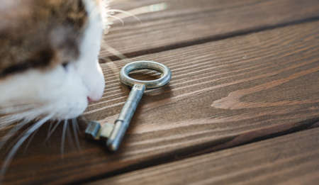 Cat relax with ancient key. The concept of buying a new home. Wood background