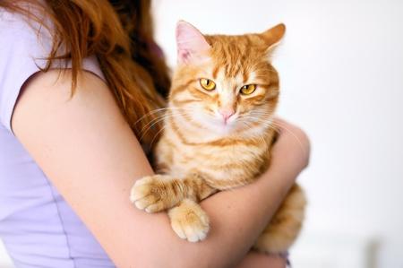 gato naranja: Chica hermosa celebraci�n de tomcat de naranja