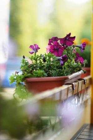 Bloempot met lila bloemen in de buitenlucht cafe