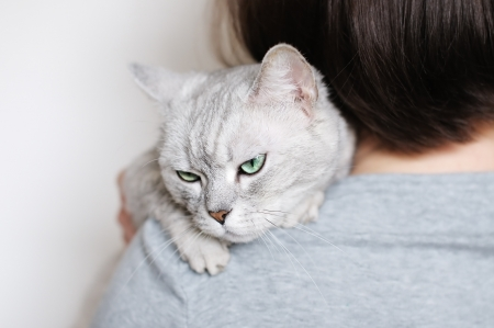 Woman holding beautiful grey cat  Stock Photo - 16806603