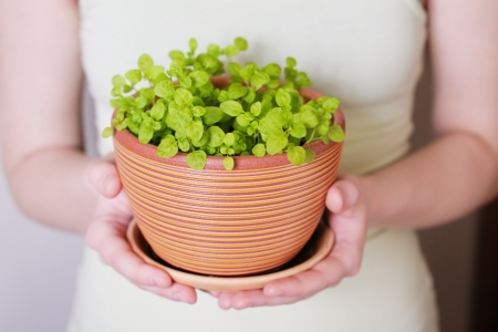 Woman holding flowerpot with sprouts in her hands photo