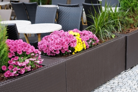 Flowerpots with lilac flowers in outdoor cafe  photo