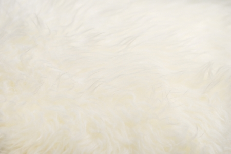 Close up sheepskin texture background Stock Photo - 17882650