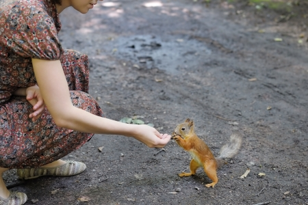 Girl feed funny little squirrel in summer park Stock Photo - 20733573