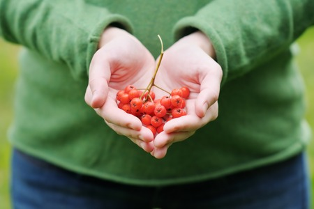 ashberry: Young woman holding ashberry in her hands  Stock Photo