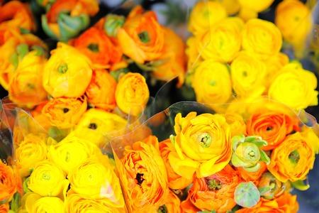 Yellow and orange ranunculus (flowers shop in Paris, France) photo