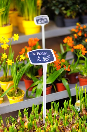 narcissist: Beautiful colorful flowers sold on outdoor flower shop in Paris, France
