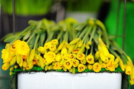 narcissist: Beautiful yellow cut flowers sold on outdoor flower shop in Paris, France Stock Photo