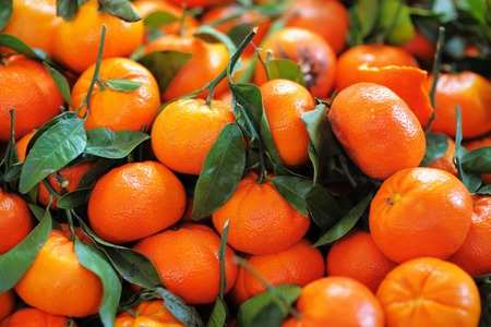 Fresh healthy bio tangerine on Paris farmer agricultural market 免版税图像 - 41066241