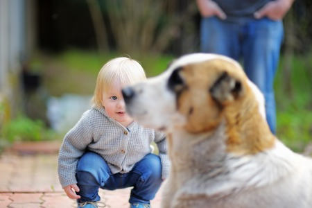 connection connections: Toddler boy playing with big dog outdoors