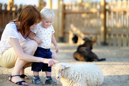 Peuter jongen en zijn jonge moeder op zoek naar schapen bij dierentuin