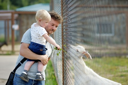 zoologico: Muchacho del ni�o y su edad media de alimentaci�n padre de cabra durante un viaje a un parque zool�gico Foto de archivo