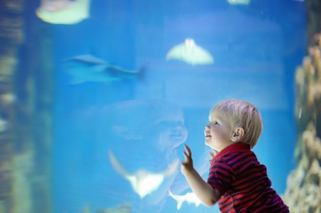 Toddler boy watches fishes in aquarium