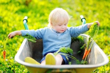 Blonde toddler boy having fun in a wheelbarrow in domestic garden Stock Photo