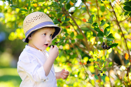domestic garden: Cute stylish toddler boy picking black currants in domestic garden