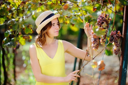 Young beautiful girl picking mellow grape in sunny day in Italy. Happy female farmer working in fruit orchard Stock Photo