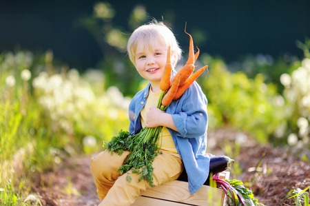 Cute little boy holding a bunch of fresh organic carrots in domestic garden. Healthy family lifestyle Stock Photo - 80729818