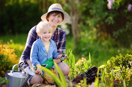 Beautiful woman and her cute grandson planting seedlings in bed in the domestic garden at summer day. Garden tools, gloves and watering can outdoors. Gardening activity with little kid and family photo