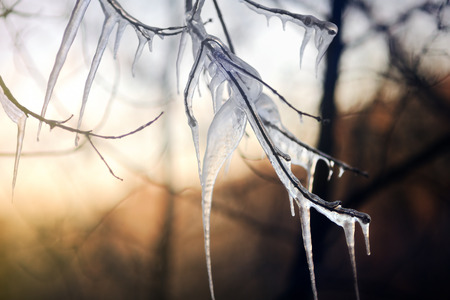 Close up photo of icy tree branch on a cold winter day. Freezingicy rain Stock Photo