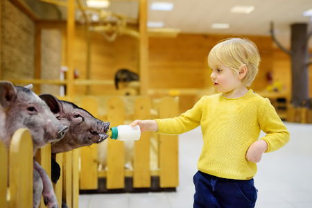 Kleine jongen voederen van varkens. Kind in indoor kinderboerderij. Kid plezier in boerderij met dieren