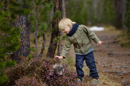 ?ute little boy examines a Heather Bush in the Swiss National Park in the spring. Active family time outdoors. Hiking with young children. Study of nature. Young naturalist. 版權商用圖片