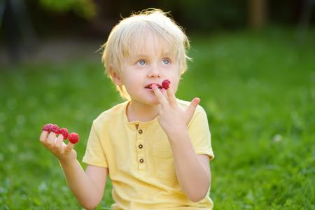 Little boy looking on his harvest on raspberry farm, childhood concept
