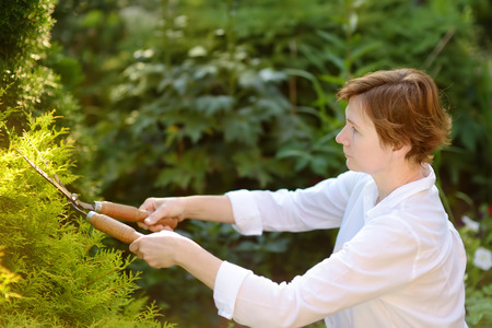 Portrait of mature female gardener. Woman working with secateur in domestic garden at summer day. Gardening activity