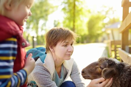 Little boy and mature woman are petting sheep. Family in petting zoo. Kid having fun in farm with animals. Childs and animals. Fun for children on school holidays.
